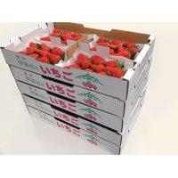 紅ほっぺ(べにほっぺ)4パックセット・5箱(4L/5L)