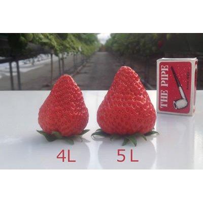 画像2: 紅ほっぺ(べにほっぺ)4パックセット・1箱(4L/5L)